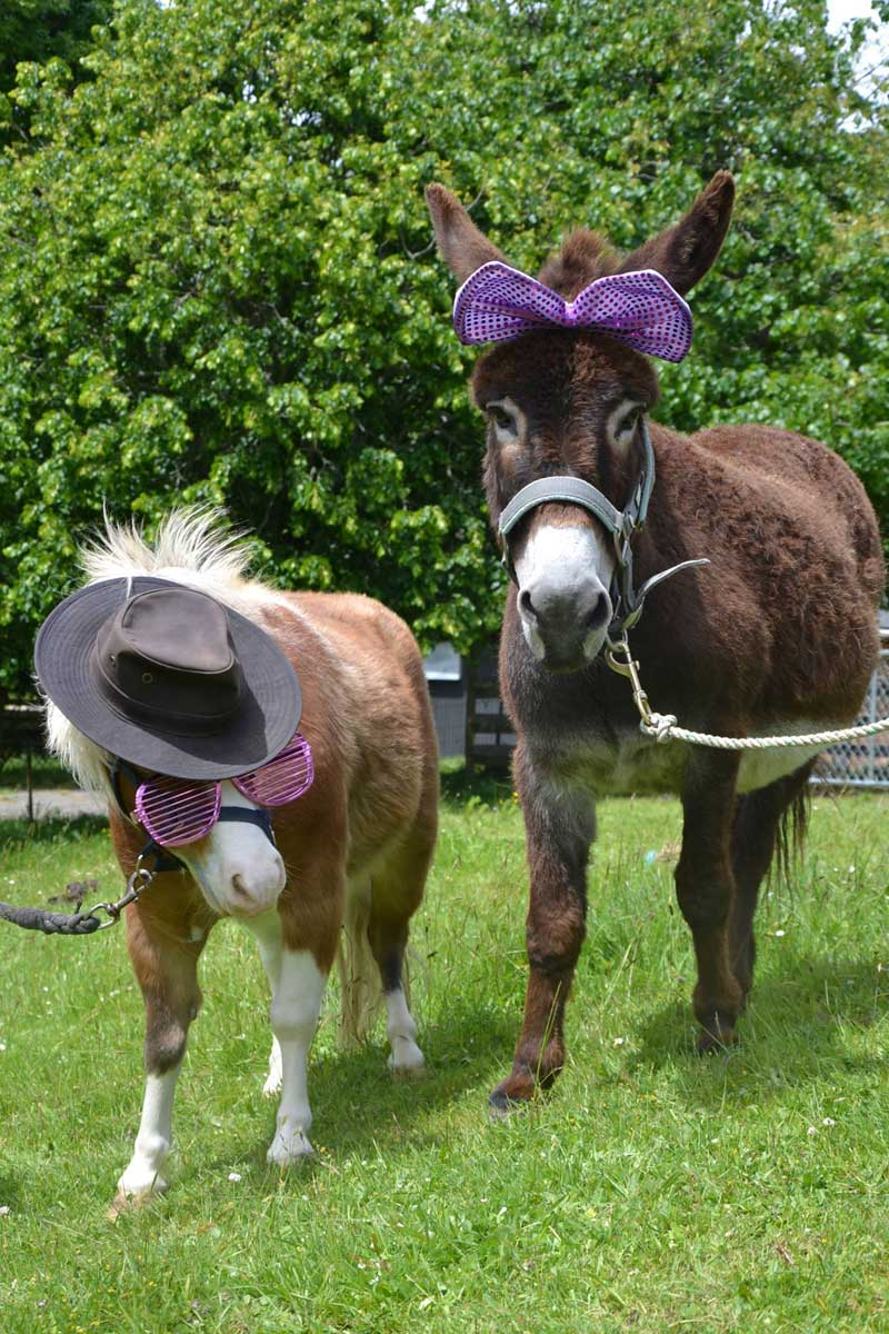Ponyanddonkey